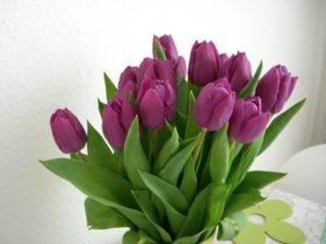 Tulpen / Foto: Larissa Vassilian