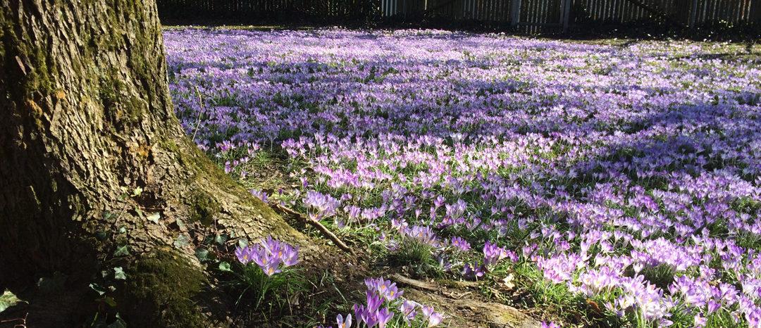 SG #098: Frühling