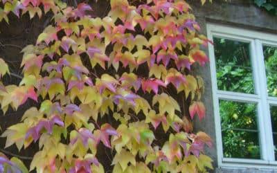 SG #144: Der Herbst