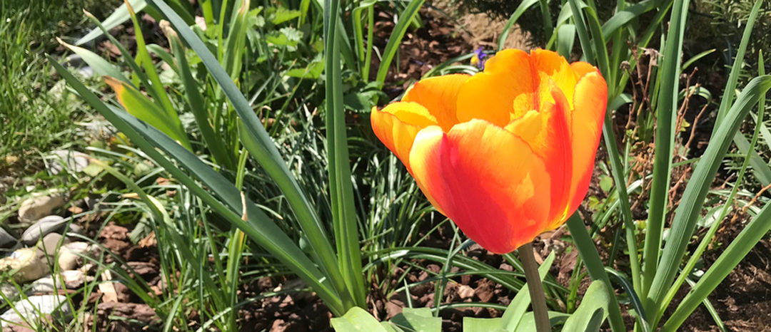 SG #166: Im Garten